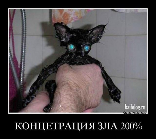 Демотиваторы - 102 (35 фото)