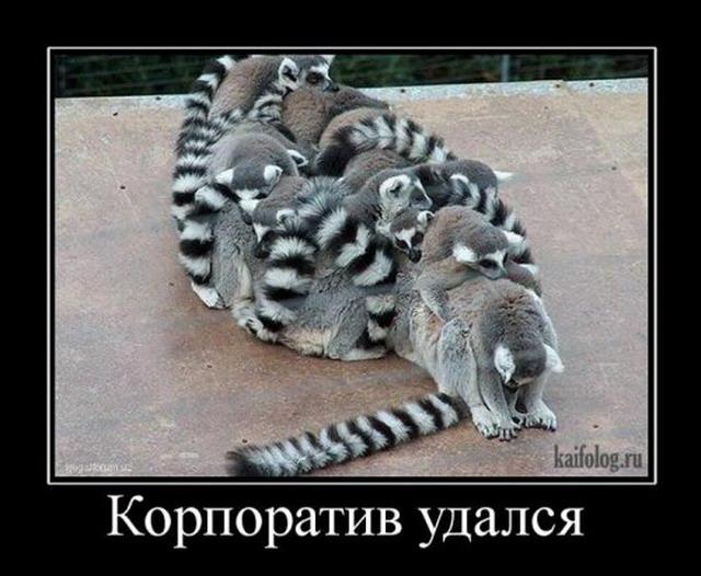 Демотиваторы - 103 (40 фото)