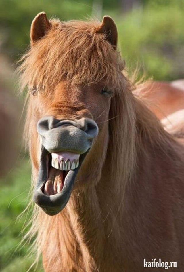 Очень красивые фото лошадей