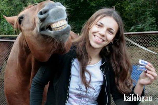 Приколы про лошадей (50 фото)