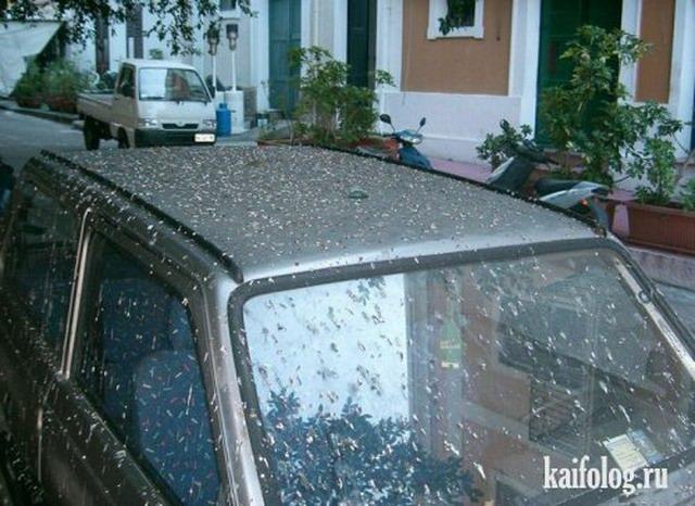 Птицы против авто (25 фото)