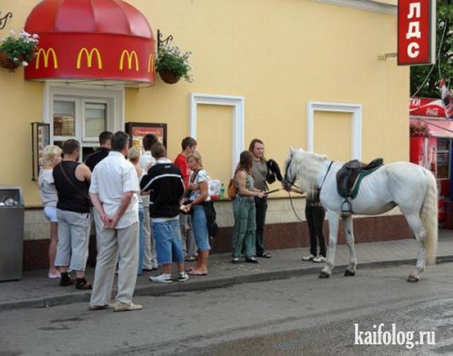 Приколы про лошадей 50 фото