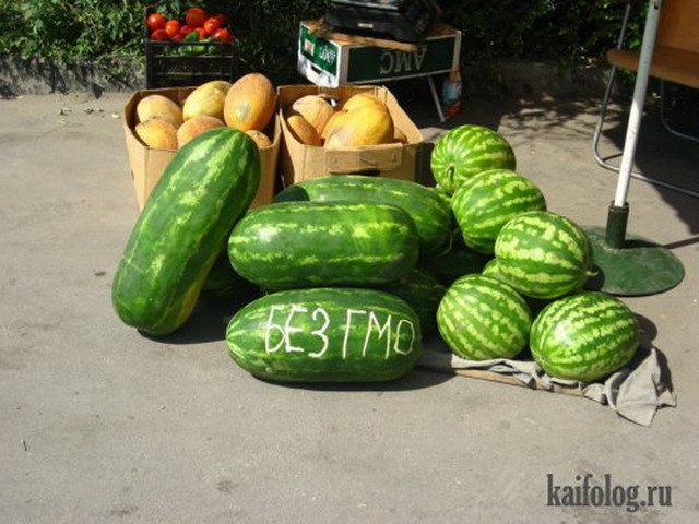 Чисто русские фото. Подборка-115 (95 фото)