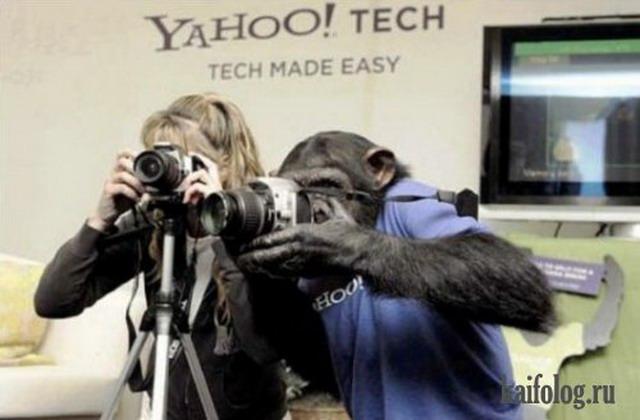 Приколы про обезьян. Часть-3 (45 фото)