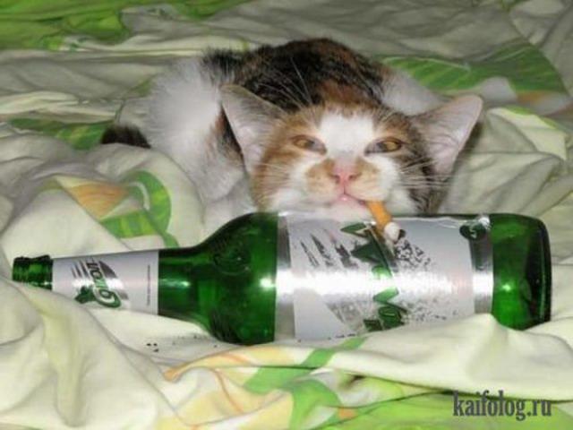 Чисто русские котэ (35 фото)