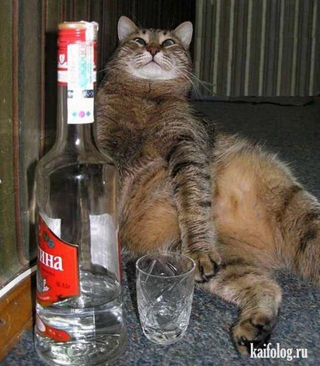 приколы видео смотреть кошек: