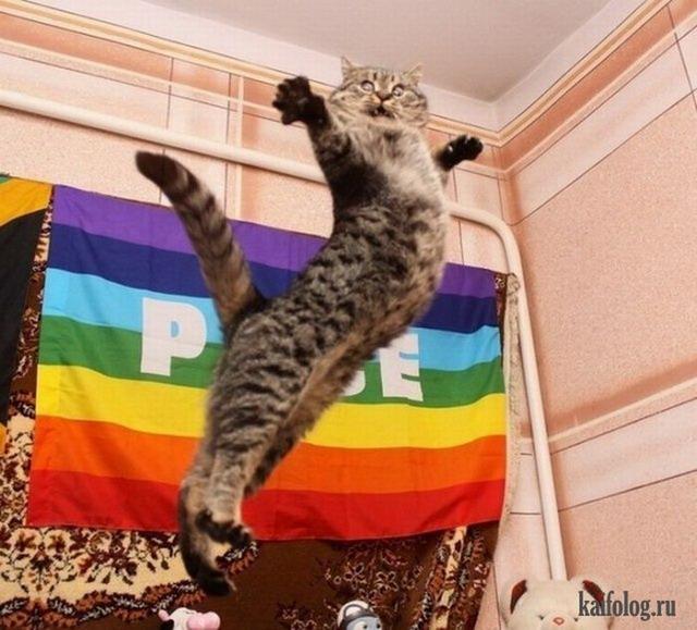Прикольные коте (40 фото)