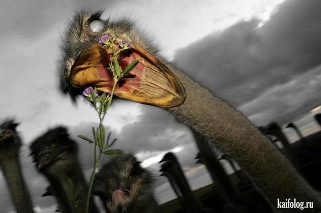 Прикольная животина (50 фото)