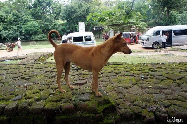 kaifolog.ru на Шри-Ланке (40 фото)