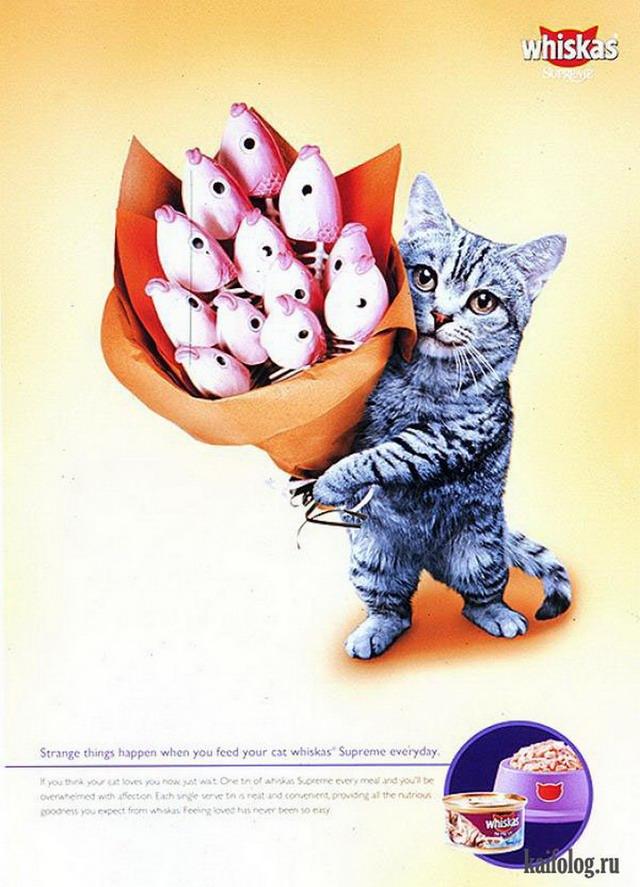 Смешные поздравления от котов 811