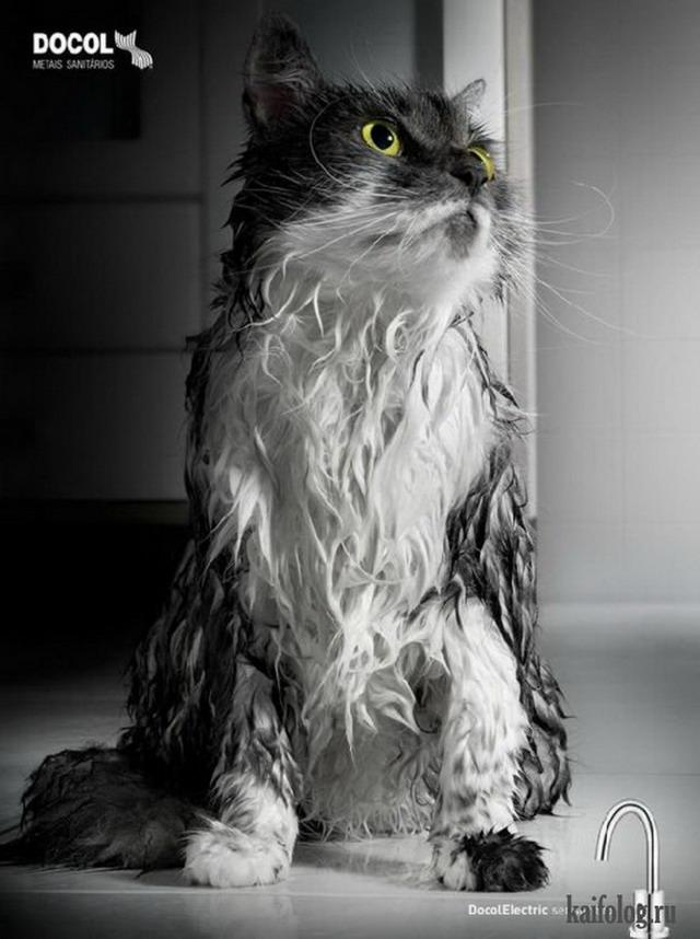 Кошки в креативной рекламе (55 фото)