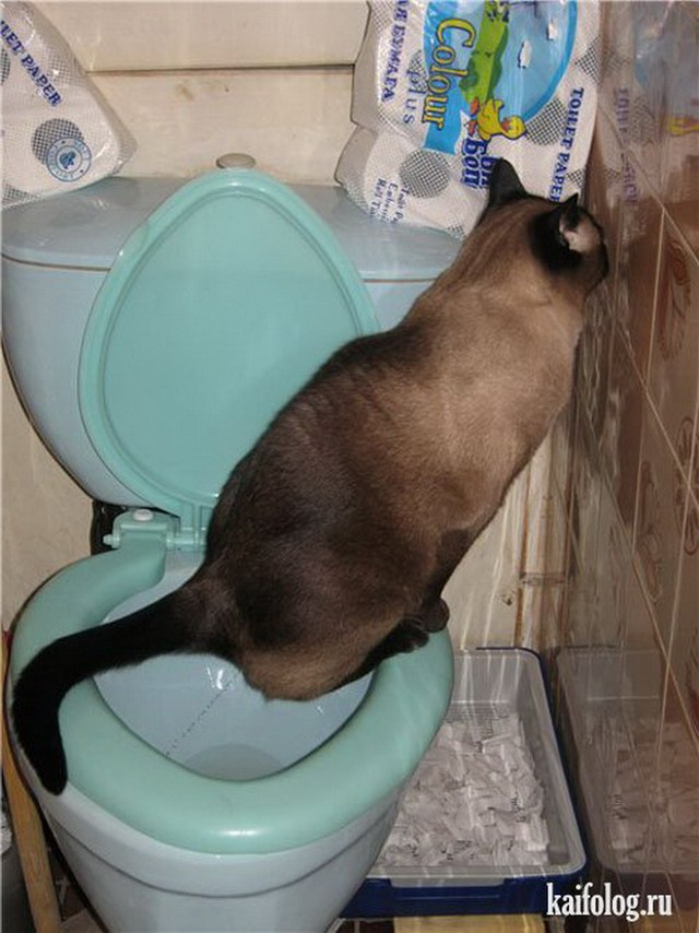 Приколы про кошек (65 фото)