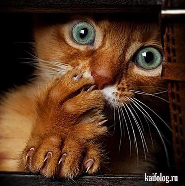 кошки фото приколы смотреть