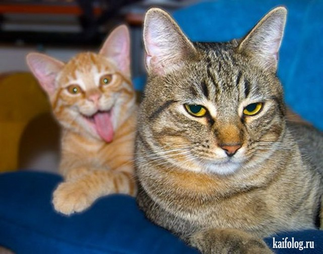 Прикольные котэ (50 фото)