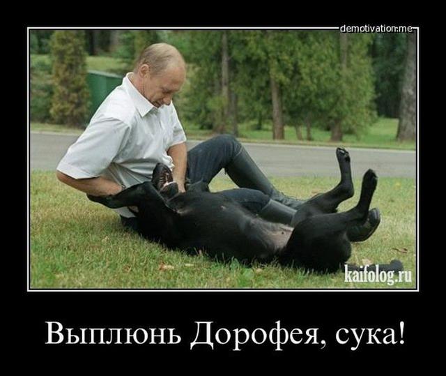 Демотиваторы про кота Дорофея (20 фото)