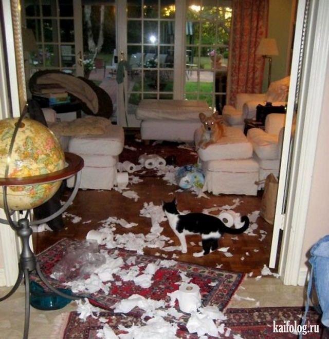 Домашние террористы (50 фото)