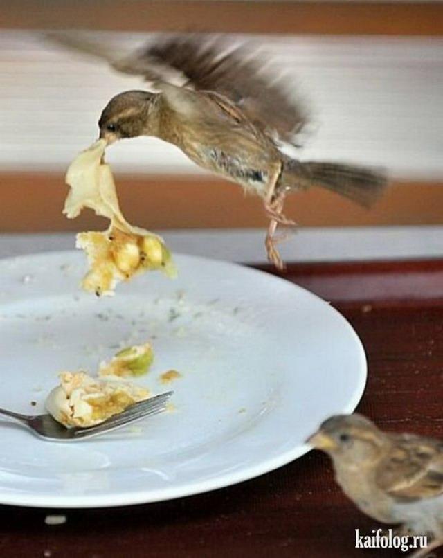Еда и животина (50 фото)