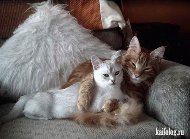 http://kaifolog.ru/uploads/posts/2012-04/thumbs/1335791340_043.jpg