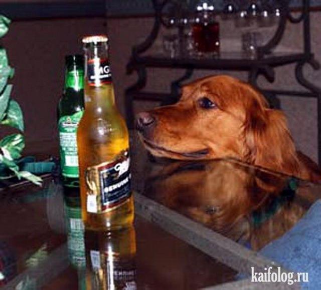 Собаки тоже любят пиво (30 фото)