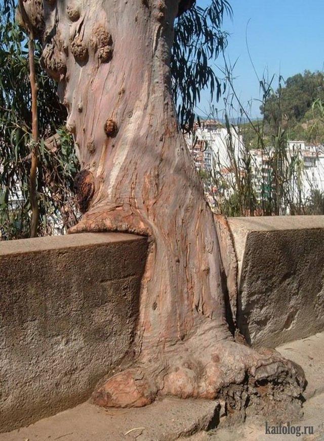 Прожорливые деревья (50 фото)
