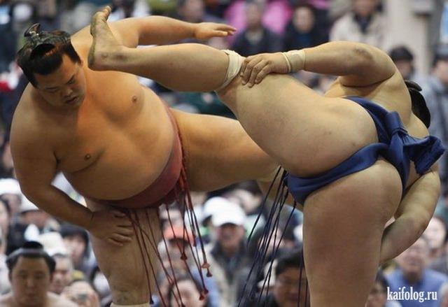 Приколы про сумо (50 фото)