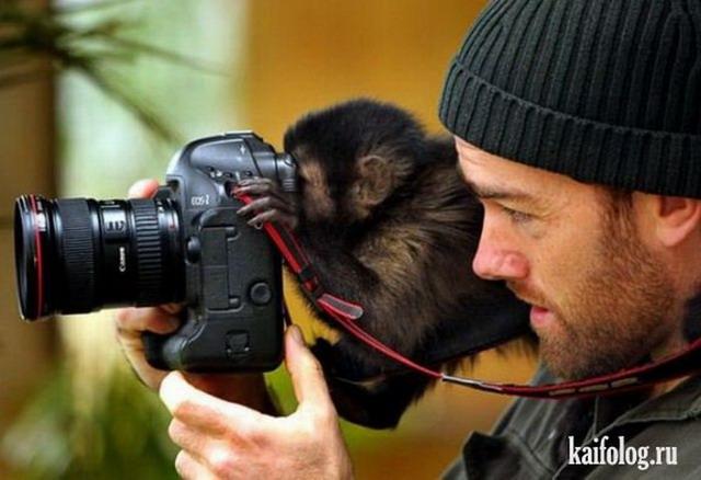 Приколы про обезьян. Часть - 4 (50 фото)