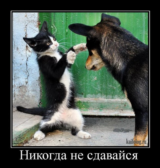 Демотиваторы про животных (55 фото)