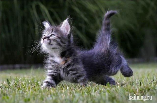 видео приколы про котов что тебе надо