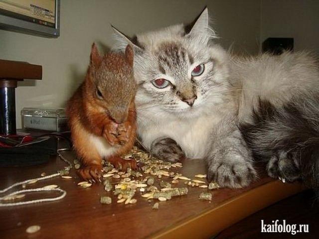видео приколы про котов самые смешные