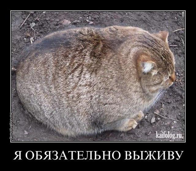 Демотиваторы - 138 (35 фото)