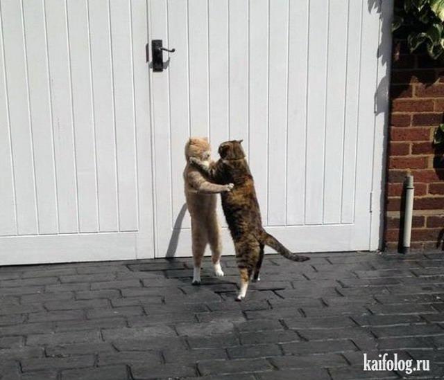 Прикольные коты (55 фото)