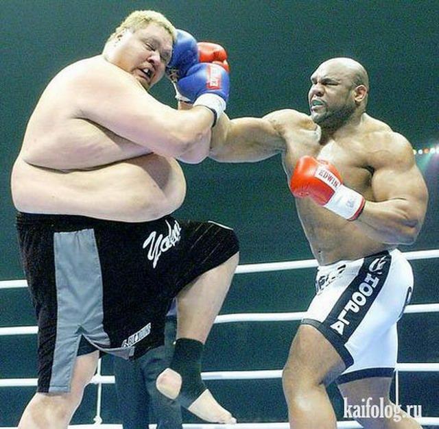 Фото боксеров прикол