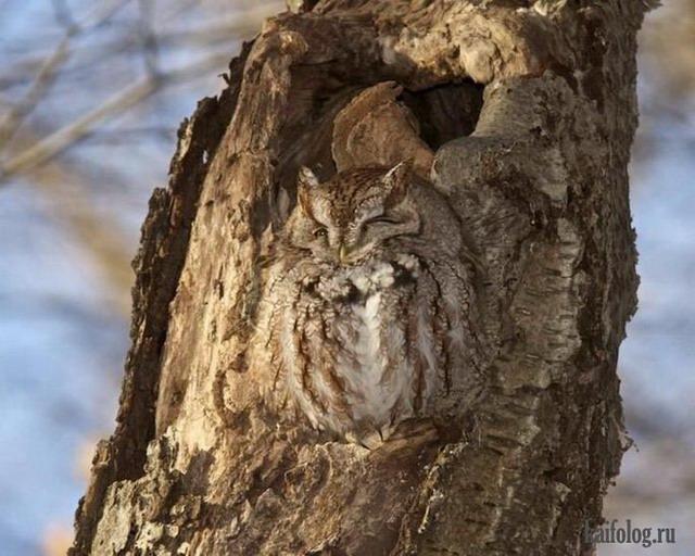 Животные приколы (65 фото)