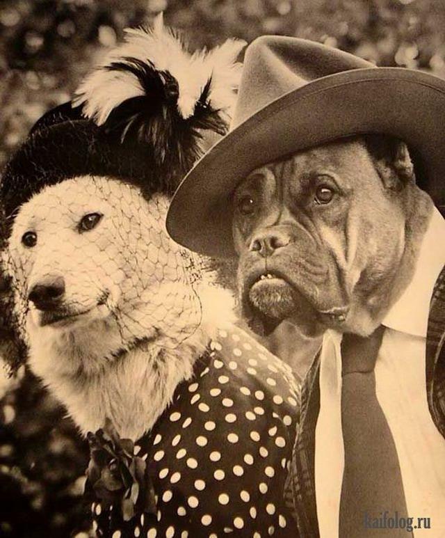 Ретро фото животных (60 фото)