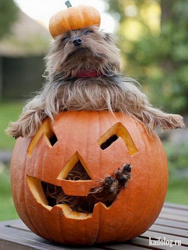 патологического прикольные фото на хэллоуин стоимость ангоры