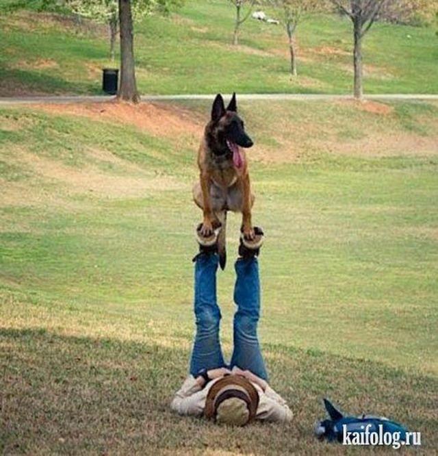 Прикольные собаки (60 фото)