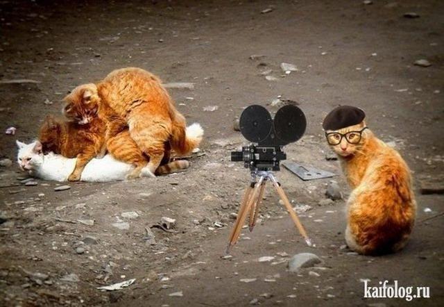 Животные фотожабы (55 фото)