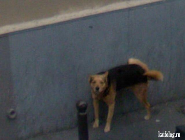 Приколы Google Street View (40 фото)