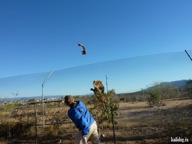 Большая подборка приколов (70 фото)