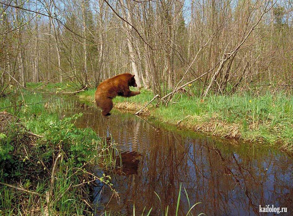 Медведи прикольные медведи фото