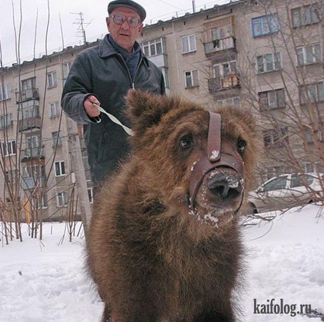 Приколы про медведей (60 фото)