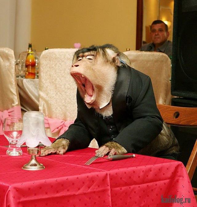 смешные картинки с официантами
