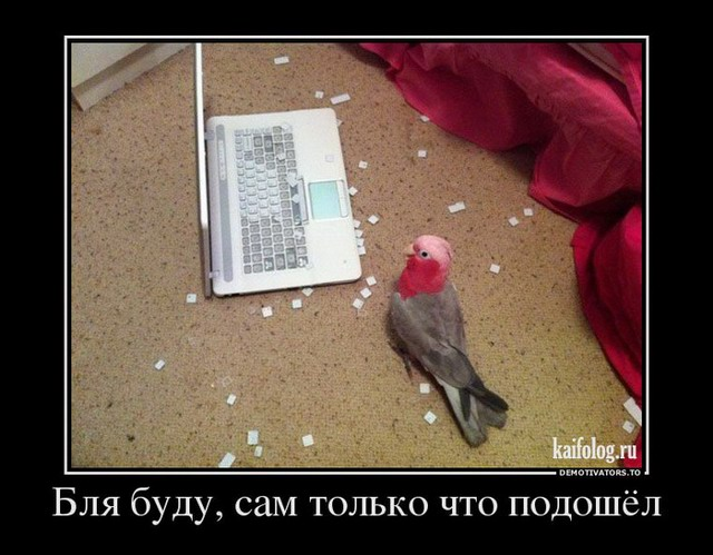 Демотиваторы - 157 (65 фото)