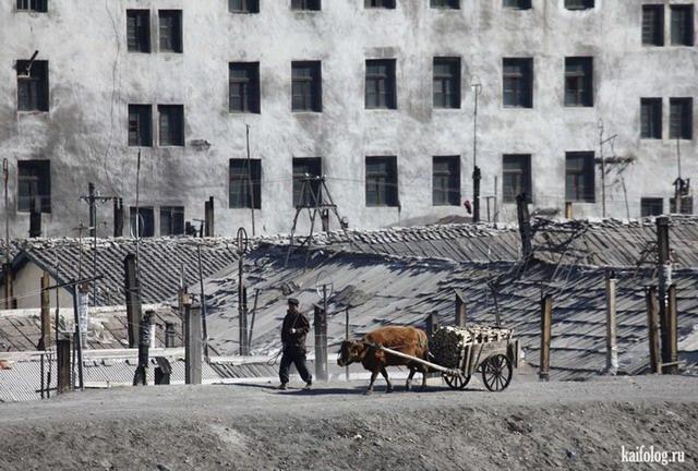 Приколы из Северной Кореи (55 фото)