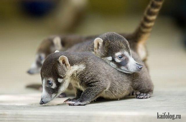 Детеныши животных (60 фото)