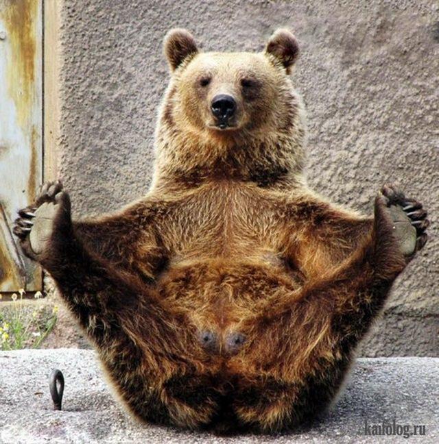 медведи картинки прикольные
