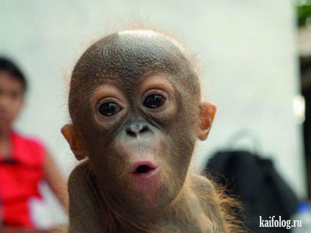 22 фото животных, которые поднимут вам настроение новые фото
