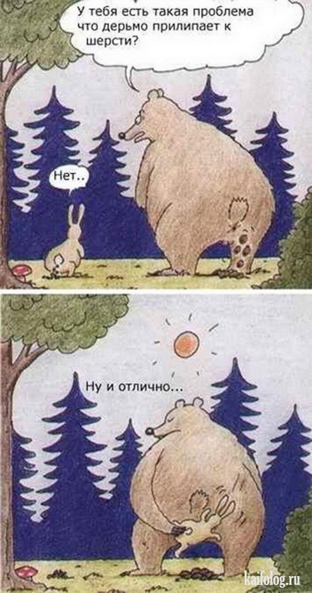 картинки медведей смешные