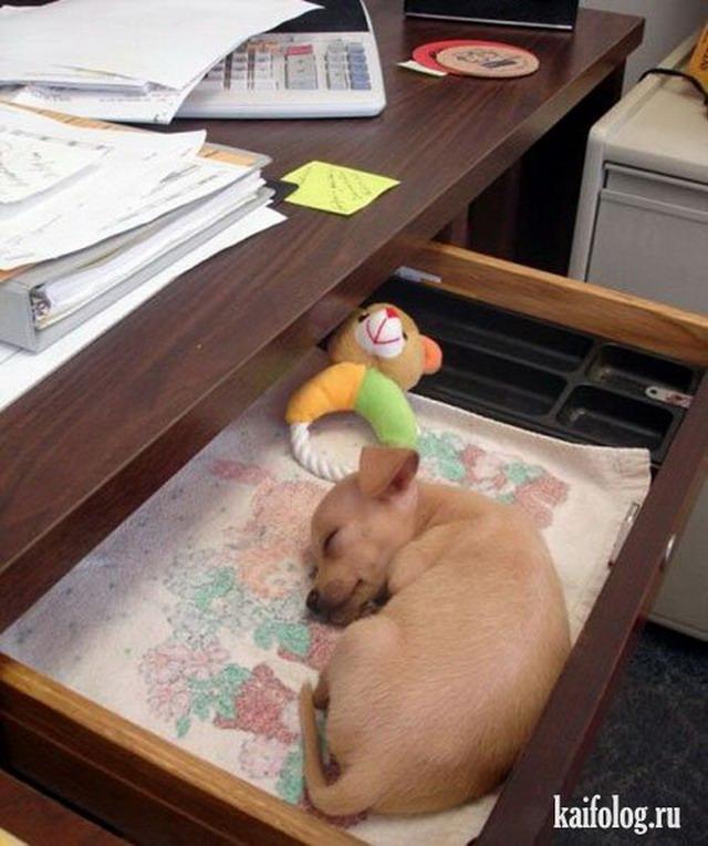 Спящие животные (55 фото)
