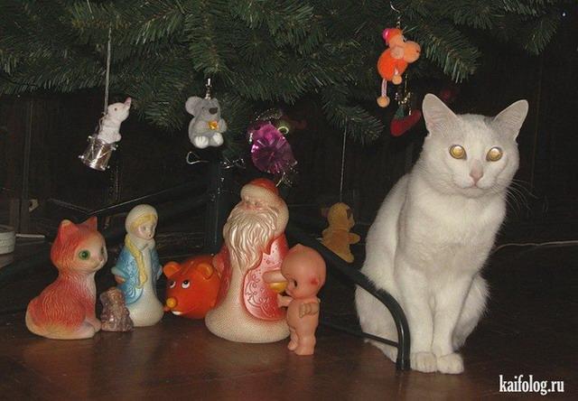 Приколы про кошек (55 фото)